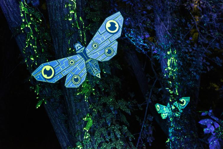 moth_session_03_markomarkowicz