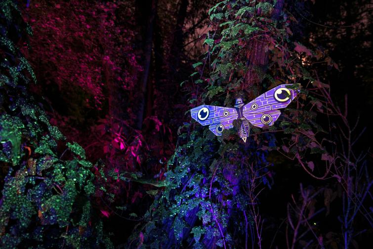 moth_session_07_markomarkowicz