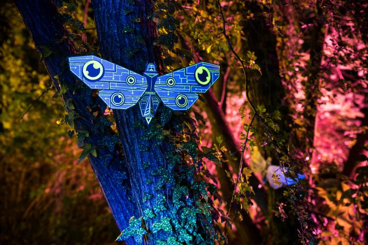 moth_session_12_markomarkowicz