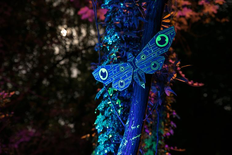 moth_session_13_markomarkowicz