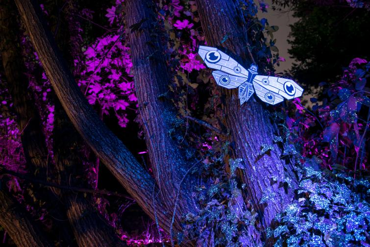 moth_session_15_markomarkowicz